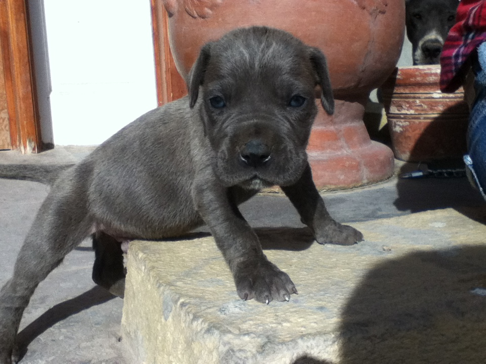 Blue Male 2 -1 Month